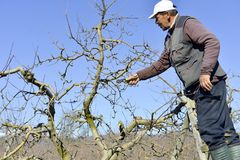 Resen,马其顿 2018年3月10日-农夫修剪在o的苹果树 免版税库存照片