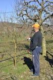 Resen,马其顿 2018年3月10日-农夫修剪苹果树在果树园在Resen, Prespa,马其顿 Prespa是知名的区域  库存照片