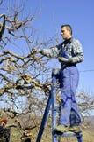 Resen,马其顿 2018年3月10日-农夫修剪苹果树在果树园在Resen, Prespa,马其顿 Prespa是知名的区域  免版税库存图片