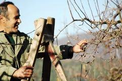 Resen,马其顿 2016年12月3日-农夫修剪苹果树在果树园在Resen, Prespa,马其顿 Prespa是知名的区域 免版税库存图片