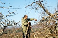 Resen,马其顿 2016年12月3日-农夫修剪苹果树在果树园在Resen, Prespa,马其顿 Prespa是知名的区域 库存照片