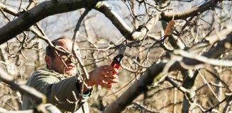 Resen,马其顿 2016年12月3日-农夫修剪苹果树在果树园在Resen, Prespa,马其顿 Prespa是知名的区域 免版税图库摄影