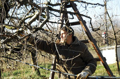 Resen,马其顿 2016年12月3日-年轻农夫修剪苹果树在果树园在Resen, Prespa,马其顿 Prespa是知名的r 图库摄影