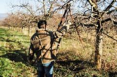Resen,马其顿 2016年12月3日-年轻农夫修剪苹果树在果树园在Resen, Prespa,马其顿 Prespa是知名的r 免版税库存图片
