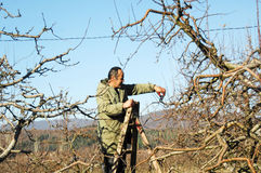 RESEN, MACEDONIA. DECEMBER 3, 2016- Farmer pruning apple tree in orchard in Resen, Prespa, Macedonia. Prespa is well known region Stock Photos