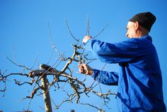RESEN, MACEDONIA. MARCH 16, 2019- Farmer pruning apple tree in orchard in Resen, Prespa, Macedonia. Prespa is well known region in. Macedonia on producing high stock images