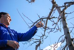 RESEN, MACEDONIA. MARCH 16, 2019- Farmer pruning apple tree in orchard in Resen, Prespa, Macedonia. Prespa is well known region in. Macedonia on producing high stock image