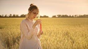 Resercher de la science d'agriculture sur le champ de blé Expérience de recherches d'agriculture banque de vidéos