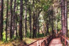 Reserv för biosfär för monarkfjäril, Michoacan, Mexico royaltyfri fotografi