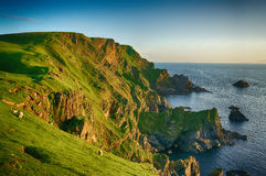Reserv för solnedgångHermaness natur Unst (Shetland) Royaltyfria Bilder