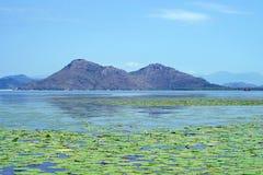 Reserv sjö Skadar i Montenegro royaltyfri foto