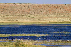 Reserva amarga del nacional del lago Fotografía de archivo