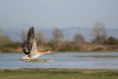 Reserva Birdwatching foto de stock