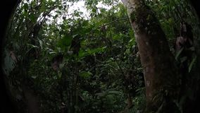 Reserva da orquídea de Pahuma filme
