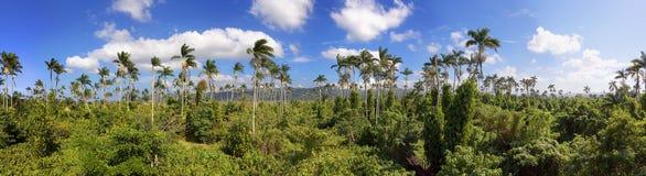 Reserva de la palma real en Jamaica Imagen de archivo libre de regalías