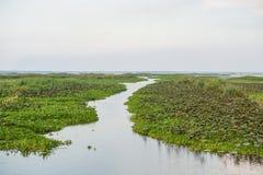 Reserva de las aves acuáticas de Thale Noi Imagen de archivo