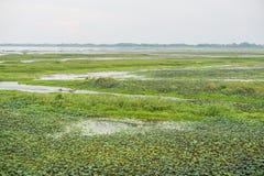 Reserva de las aves acuáticas de Thale Noi Imágenes de archivo libres de regalías