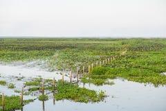 Reserva de las aves acuáticas de Thale Noi Fotos de archivo libres de regalías