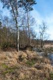 Reserva de naturaleza belga a finales del invierno Fotos de archivo