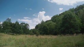 Reserva de naturaleza cerca de Dresden metrajes