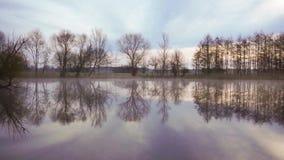Reserva de naturaleza con el pequeño lago almacen de video