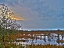 ¡Reserva de naturaleza de Carnon de los corazones - el pantano de Tregaron! Imagen de archivo libre de regalías