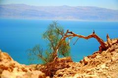 Reserva de naturaleza de Ein Gedi (Israel) Fotos de archivo libres de regalías