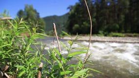 Reserva de naturaleza r?o Altai de la monta?a Paisaje hermoso en las monta?as r?o ?spero, el concepto de libertad metrajes