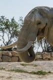 Reserva del africano de Sigean Imágenes de archivo libres de regalías