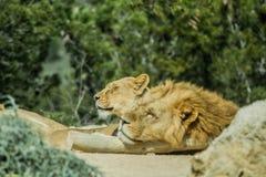 Reserva del africano de Sigean Fotos de archivo libres de regalías