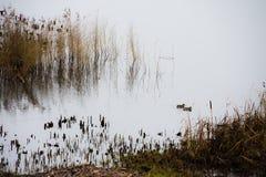 Reserva del pájaro de Leighton Moss RSPB fotografía de archivo