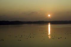 Reserva del pájaro por salida del sol Imagenes de archivo