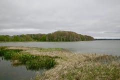 Reserva do pantanal Fotografia de Stock Royalty Free