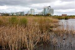 Reserva dos pantanais da baía de Cardiff Fotografia de Stock Royalty Free