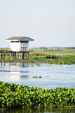 Reserva dos Waterfowl de Thale Noi fotografia de stock royalty free