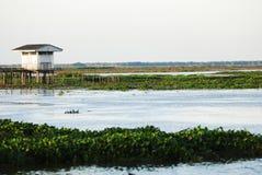 Reserva dos Waterfowl de Thale Noi fotos de stock