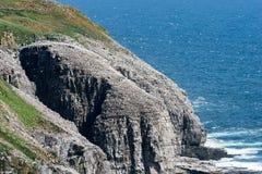Reserva ecológica do ` s de St Mary do cabo, Terra Nova Fotos de Stock