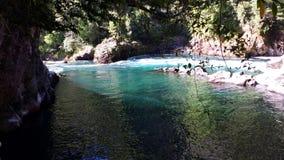 Reserva nacional de Huilo Huilo - Chile Foto de archivo