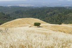 Reserva natural Fotografia de Stock Royalty Free