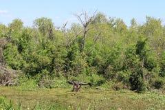 Reserva natural Imagens de Stock