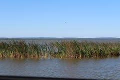 Reserva natural de Apopka Foto de Stock Royalty Free