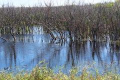 Reserva natural de Apopka Imagem de Stock