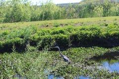 Reserva natural de Apopka Imagens de Stock