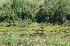 Reserva natural de Apopka Fotografia de Stock Royalty Free