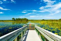 Reserva natural de la Florida Fotos de archivo libres de regalías