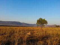 Reserva natural de Loskop imagens de stock royalty free