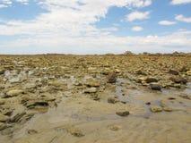 Reserva natural de Recife do cabo na baía de Angola em Port Elizabeth na costa da luz do sol, África do Sul Imagem de Stock Royalty Free