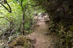 Reserva natural do córrego de Amud em Israel do norte imagem de stock
