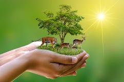 A reserva natural do conceito conserva as mãos humanas da ecologia do naco do alimento do aquecimento global dos cervos do tigre  imagens de stock royalty free