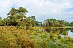 Reserva natural holandesa en colores otoñales Foto de archivo